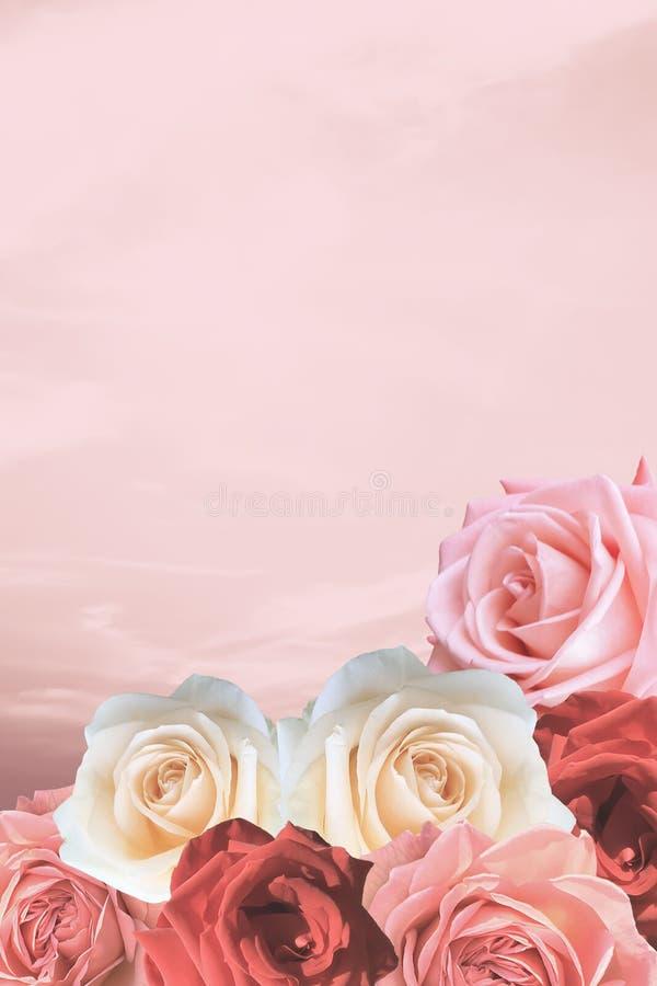 Красивые розы валентинки на романтичном симпатичном розовом небе стоковое изображение