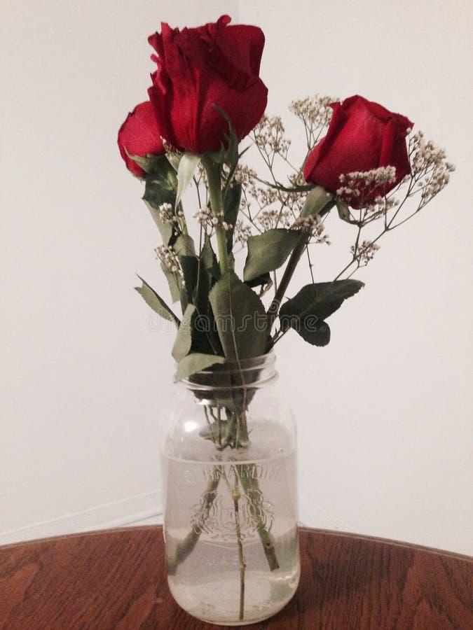 Красивые розы! стоковое фото rf