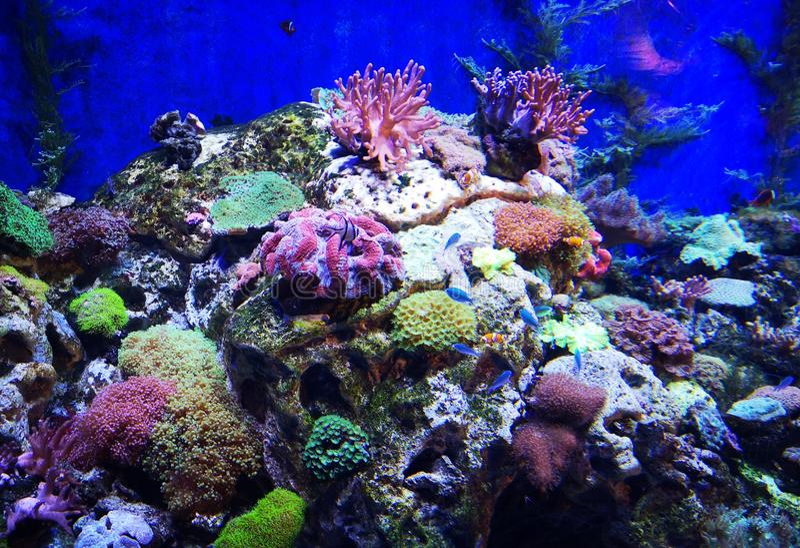 Красивые рыбы бабочки и шикарные коралловые рифы стоковые изображения