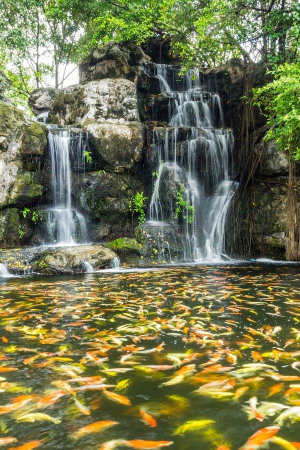 Красивые рыбы в падении воды стоковое изображение rf