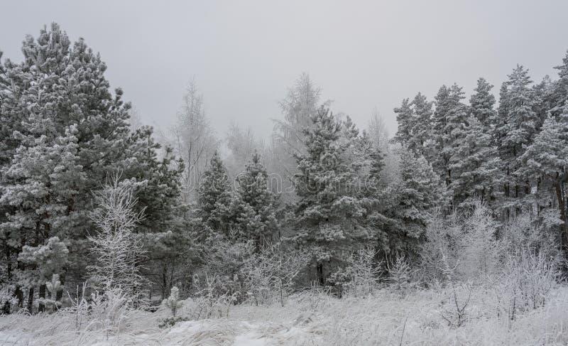 Красивые трава и деревья ландшафта зимы в снеге стоковое изображение