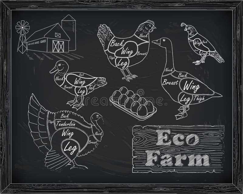 Красивые триперстки гусыни утки индюка цыпленка вырезывания схемы на иллюстрация вектора