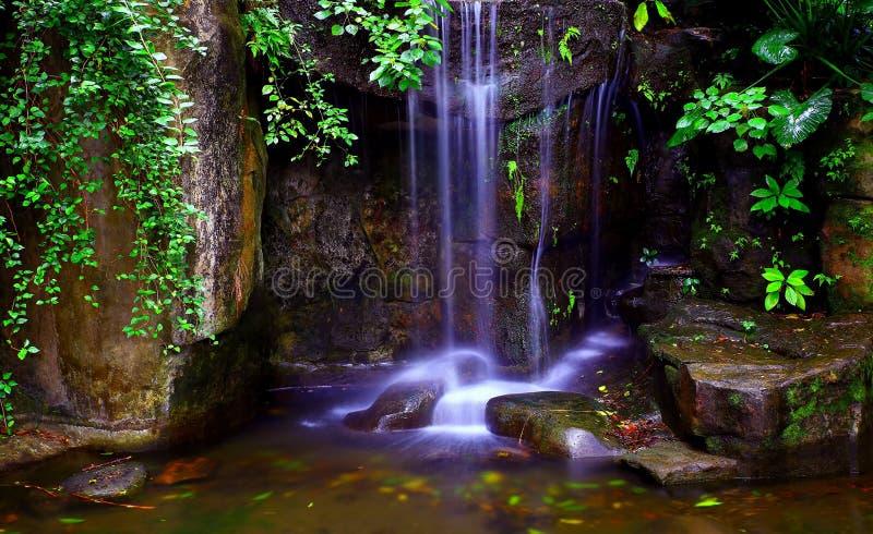 Красивые тропические водопады в саде стоковое фото