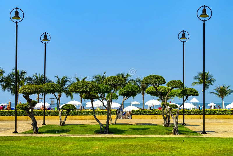 Красивые тропические деревья высекли в форме шарика, и первоначально светов в парке стоковая фотография rf