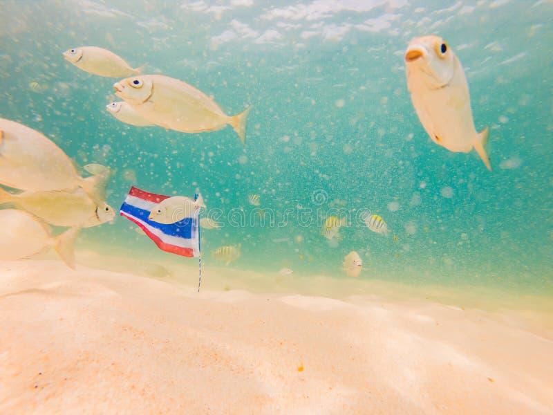 Красивые тропические рыбы на пляже с белым песком с флагом Таиланда o стоковое изображение rf