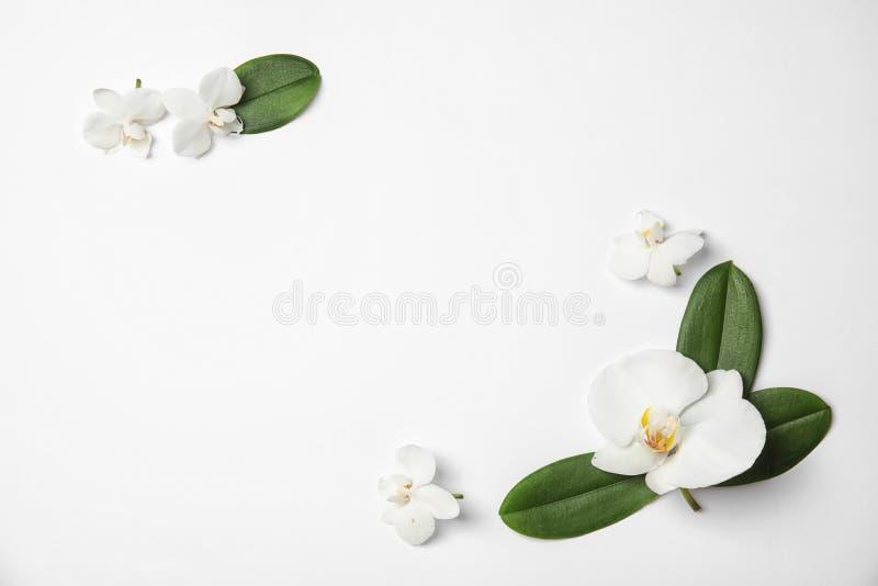 Красивые тропические цветки орхидеи на белой предпосылке, взгляде сверху стоковое изображение rf