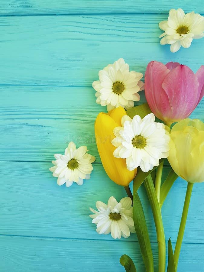 Красивые тюльпаны торжества цветеня в марше хризантемы приправляют день матерей приветствию предпосылки, на голубой деревянной пр стоковое изображение rf