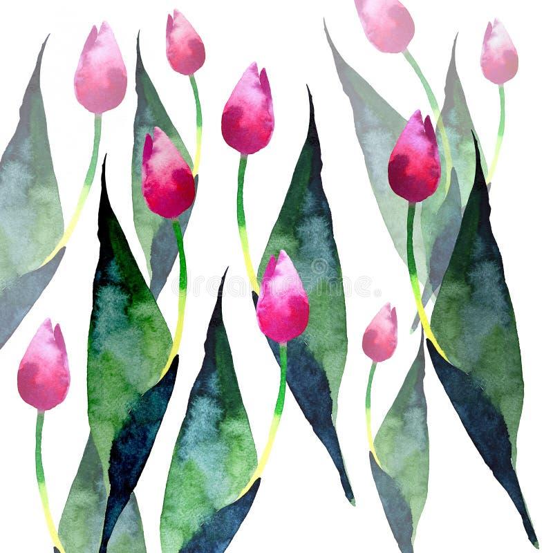 Красивые тюльпаны пинка весны делают по образцу эскиз руки акварели бесплатная иллюстрация