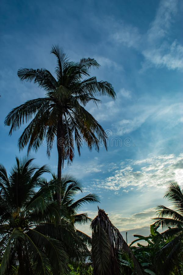 Красивые утра с светлыми облаками и кокосовыми пальмами стоковая фотография rf