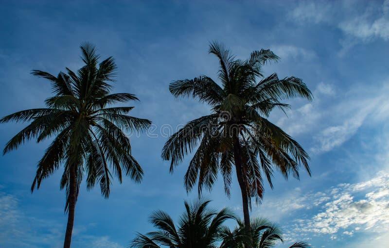 Красивые утра с светлыми облаками и кокосовыми пальмами стоковые фотографии rf