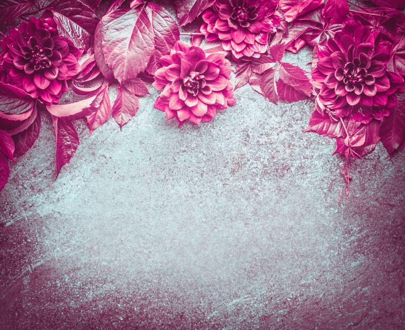 Красивые фиолетовые цветки георгинов осени и одичалые виноградины выходят составлять на темную винтажную предпосылку стоковые изображения rf
