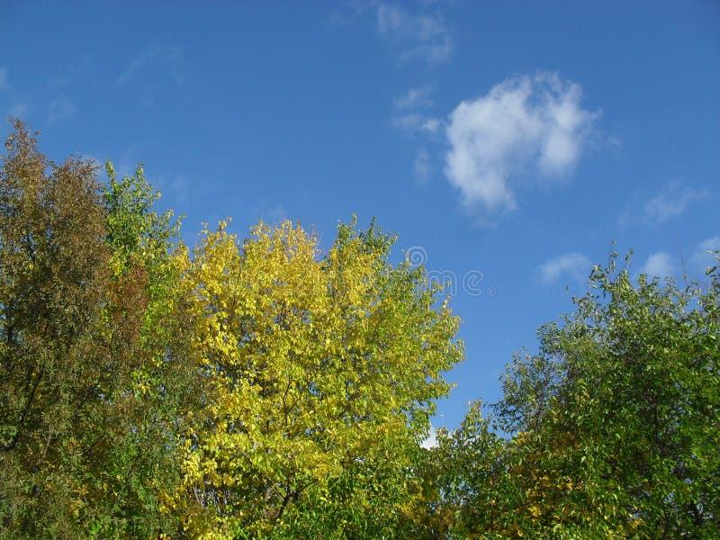 Красивые цвета осени стоковые фотографии rf