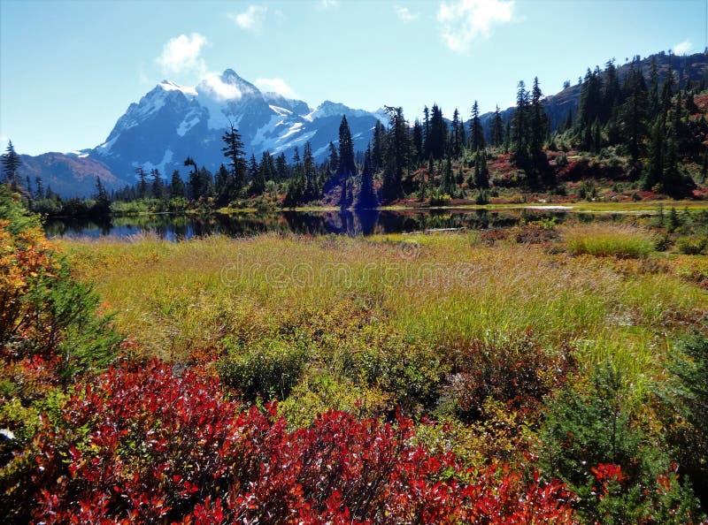 Красивые цвета падения вокруг озера изображени и взгляд держателя Shuksan в глуши хлебопека держателя стоковая фотография rf