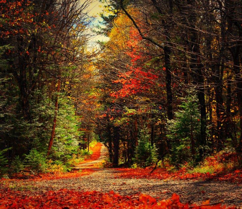 Красивые цвета падения стоковое фото rf