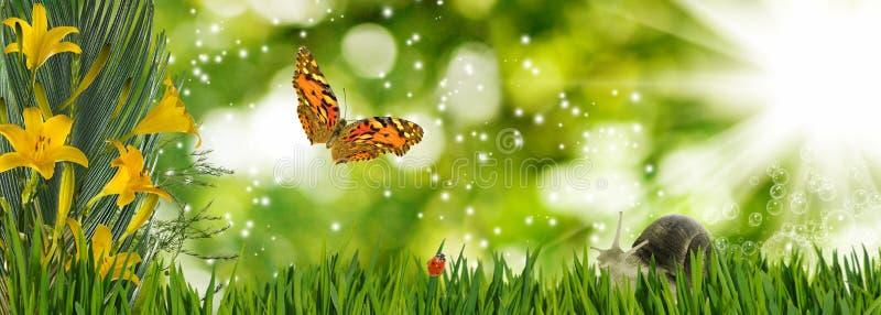 красивые цветки, бабочка и улитка в крупном плане сада стоковая фотография rf