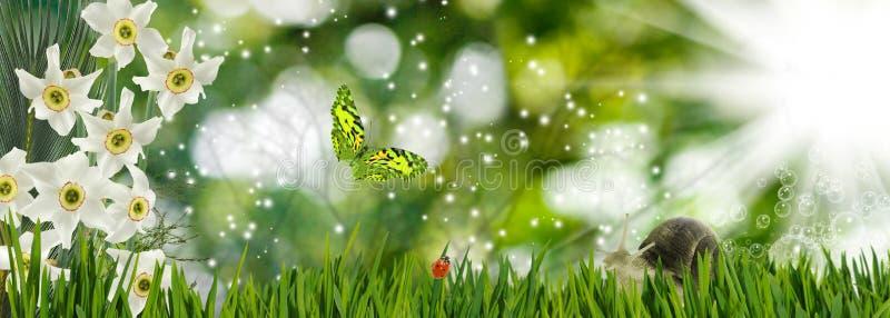 красивые цветки, бабочка и улитка в крупном плане сада стоковое фото rf