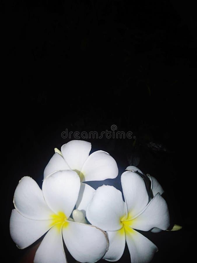 красивые цветки стоковые фотографии rf