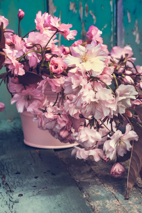 Красивые цветки вишни japanes в вазе стоковое фото rf