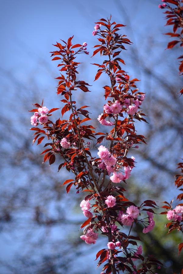 Красивые цветки в ботаническом саде Киева, Украины стоковая фотография rf