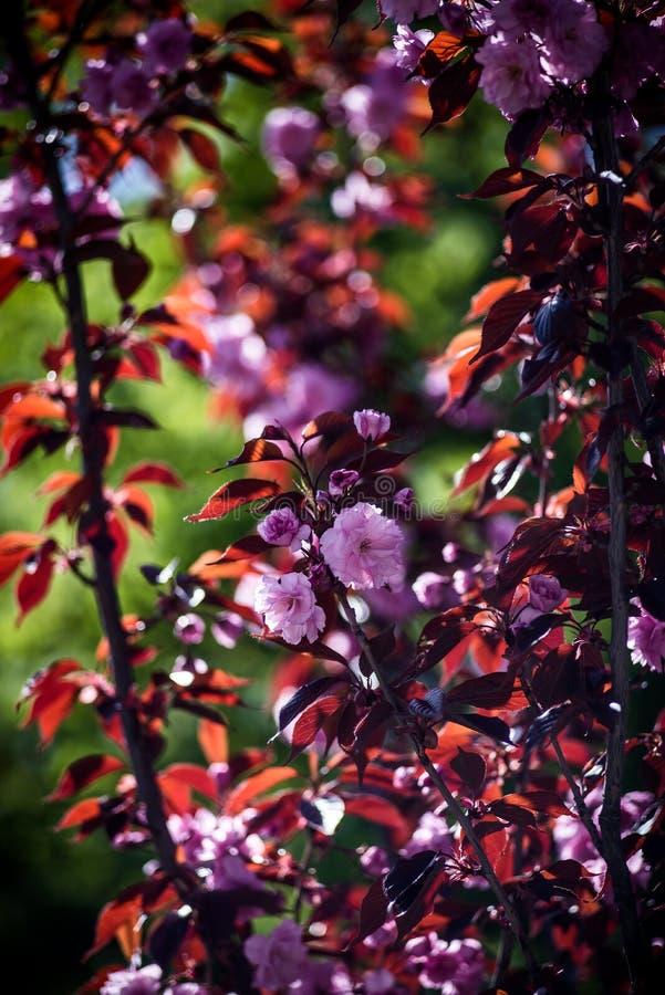 Красивые цветки в ботаническом саде Киева, Украины стоковая фотография