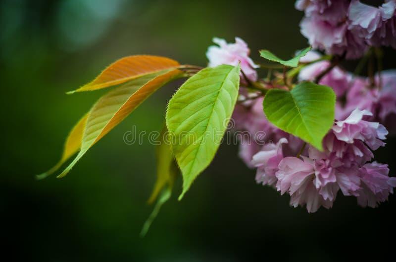 Красивые цветки в ботаническом саде Киева, Украины стоковые фото