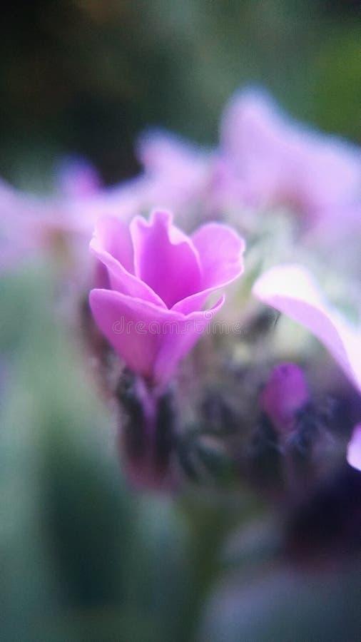 Красивые цветки в макросе снятые в городском пейзаже стоковая фотография