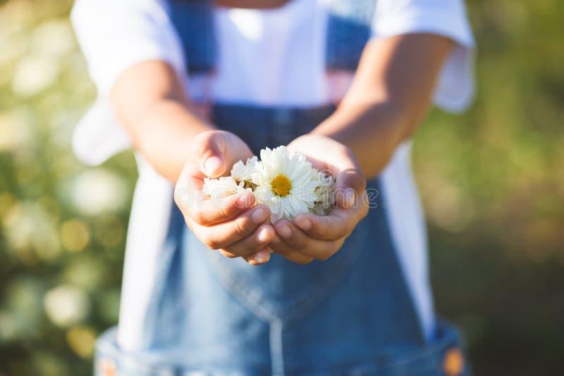 Красивые цветки в руке ребенка в поле цветка стоковое изображение rf