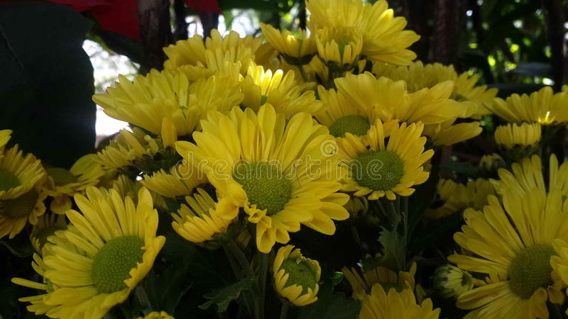 Красивые цветки в саде под солнцем зимы стоковая фотография rf