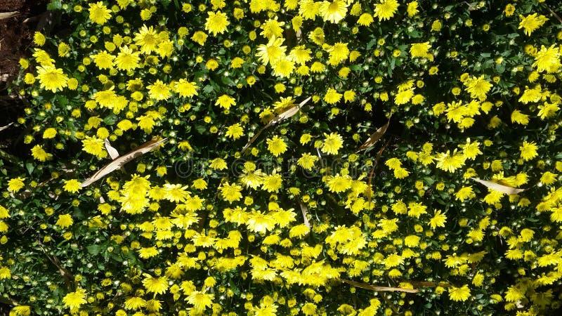 Красивые цветки в саде под солнцем зимы стоковые фотографии rf