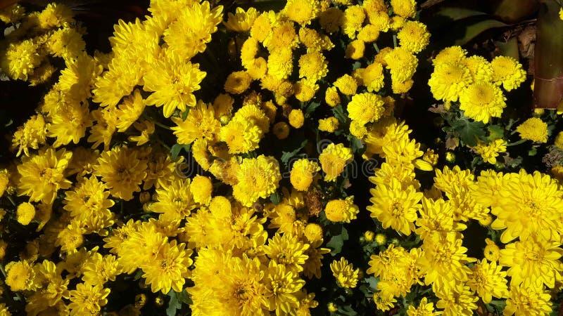 Красивые цветки в саде под солнцем зимы стоковые изображения