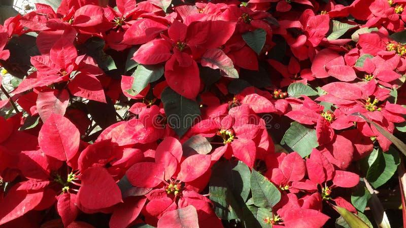 Красивые цветки в саде под солнцем зимы стоковое изображение
