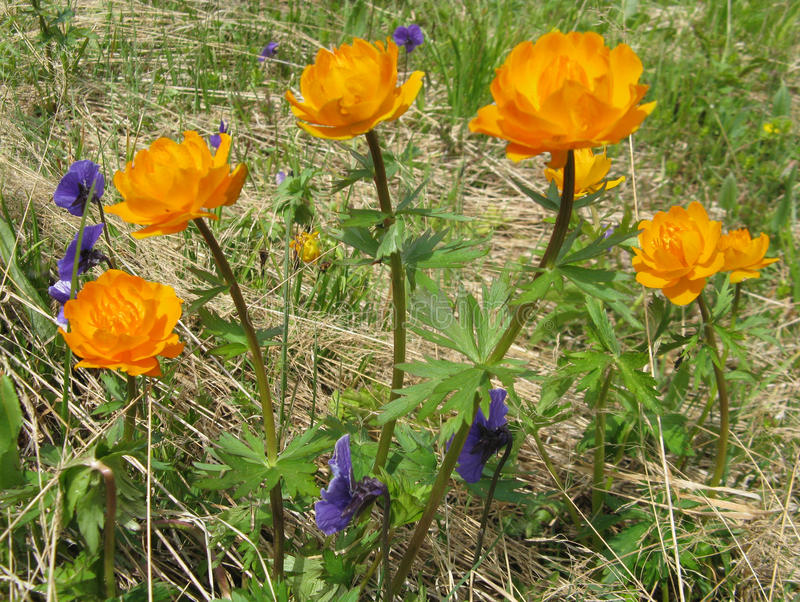 Красивые цветки леса стоковое фото rf