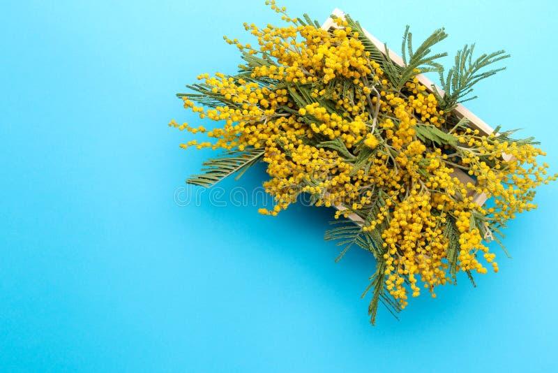Красивые цветки желтой мимозы в деревянной коробке на голубой ультрамодной бумажной предпосылке Свободное место Взгляд сверху стоковое изображение rf