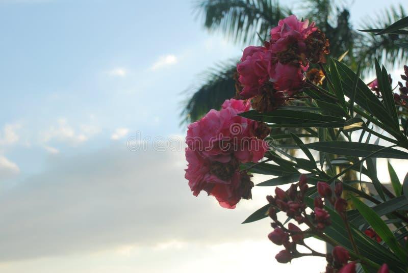 Красивые цветки, захваченные в сельском районе ‹â€ ‹â€ провинцию Панамы ³ n valle de Antà стоковые изображения rf