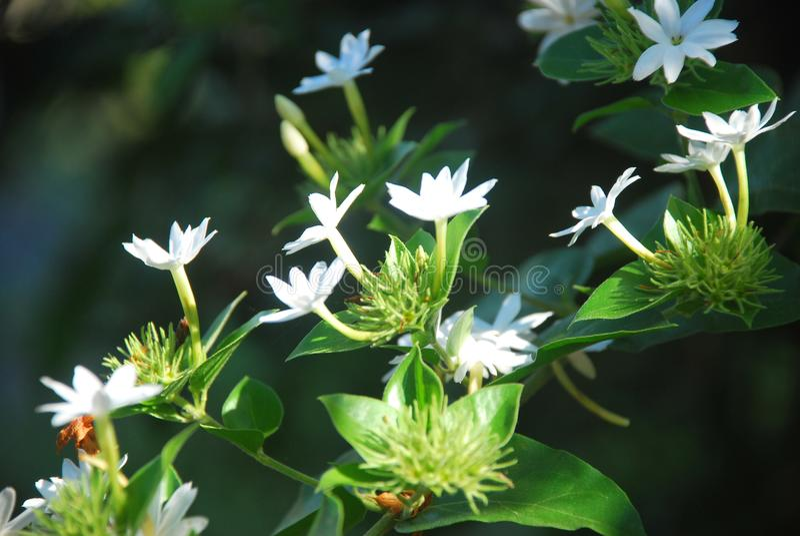 Красивые цветки, захваченные в сельском районе ‹â€ ‹â€ провинцию Панамы стоковое изображение rf