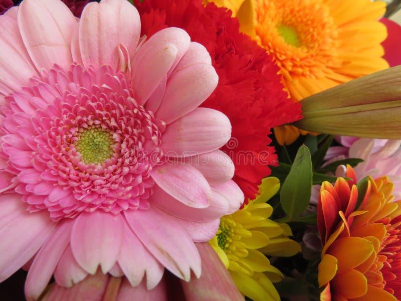 Красивые цветки интенсивных цветов и большей красоты стоковое изображение rf