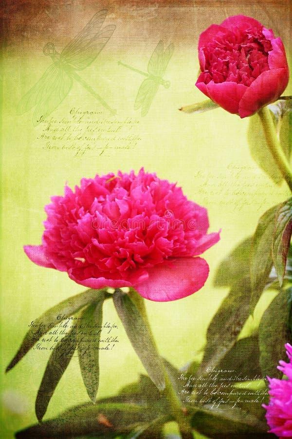 Красивые цветки и дракон пиона летают мотивы с цитатами стоковая фотография rf