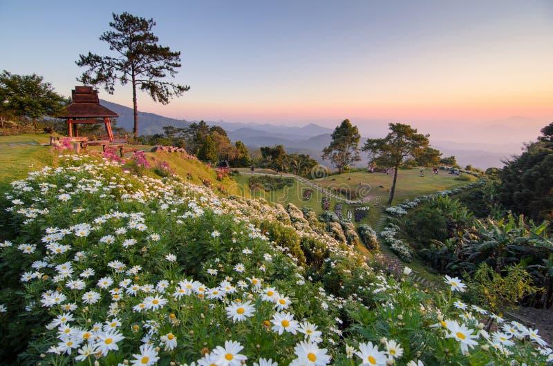 Красивые цветки на горе стоковое фото rf