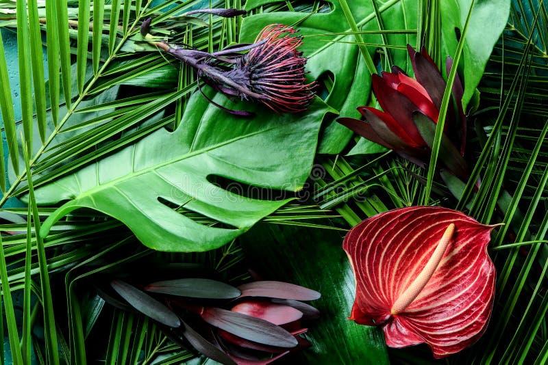 Красивые цветки на зеленых тропических листьях стоковые фото