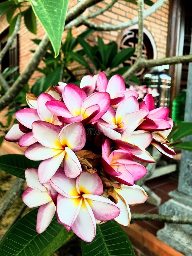 Красивые цветки около дома стоковые изображения rf