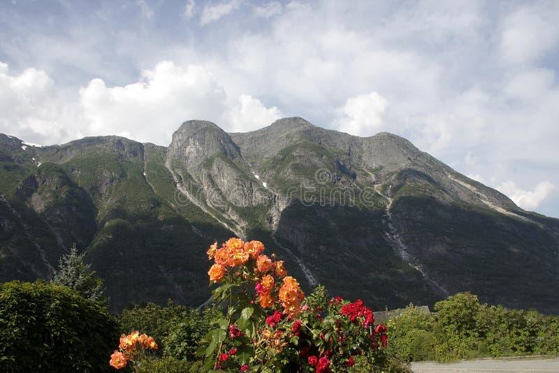 Красивые цветки растут в норвежском фьорде стоковая фотография