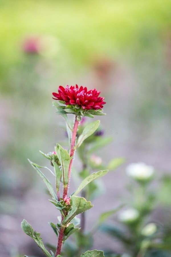Красивые цветки, собранные на поле стоковая фотография