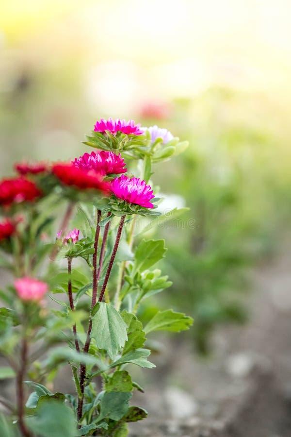 Красивые цветки, собранные на поле стоковое фото rf