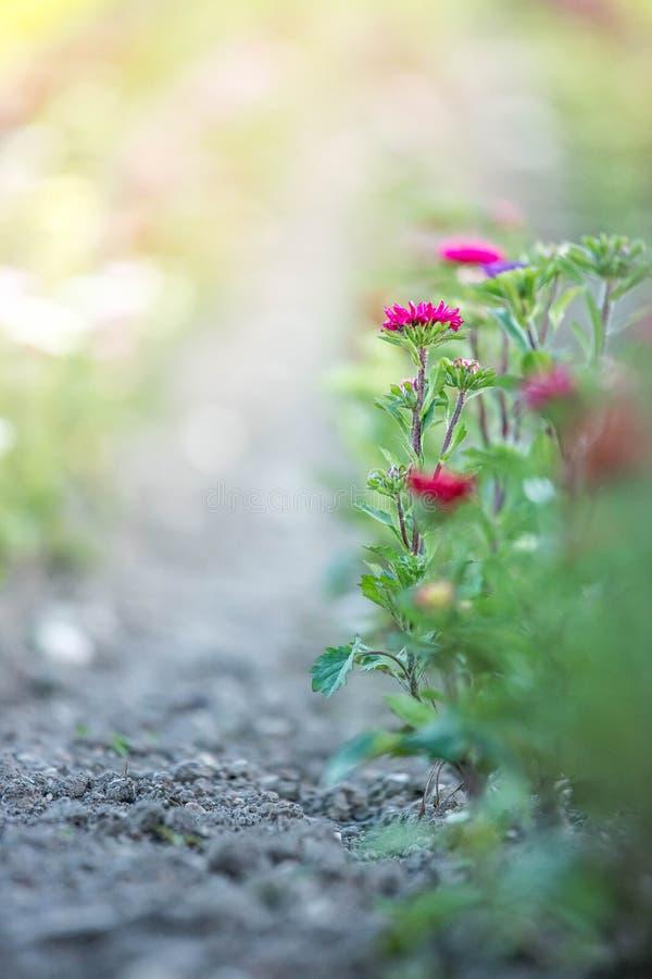 Красивые цветки, собранные на поле стоковое изображение rf