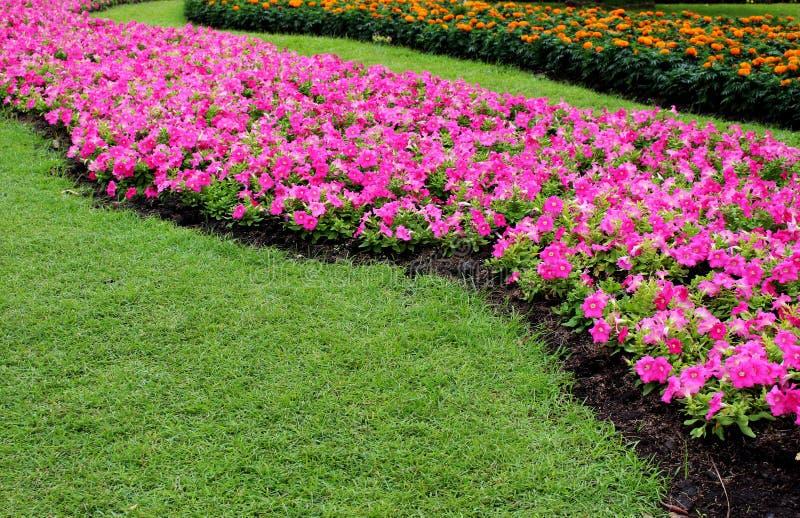 Красивые цветки цветка и апельсина садовничая пинка дизайна около зеленой травы в парке стоковая фотография rf