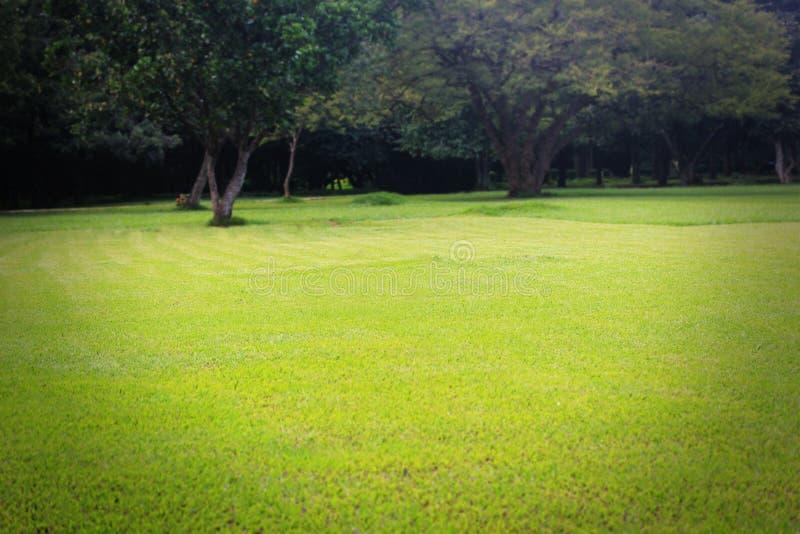Красивые яркие ые-зелен лужайка & деревья стоковые фото