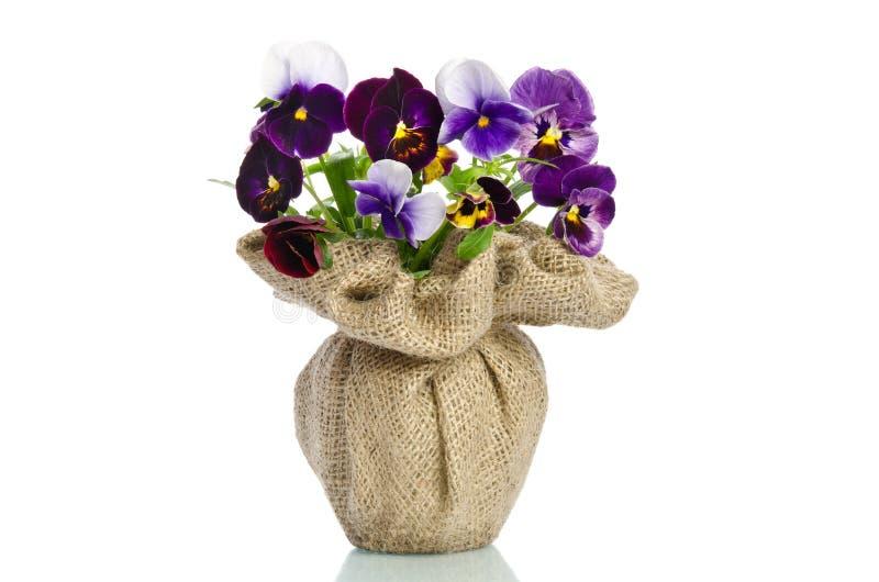 Красивые pansies в вазе стоковое изображение rf
