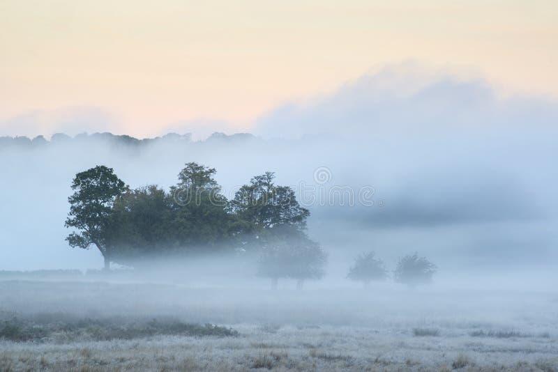 Красивые wi ландшафта сельской местности падения осени восхода солнца сильного тумана стоковое фото