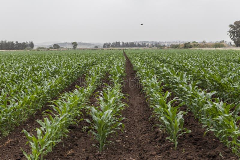 Красивый аграрный край стоковые фотографии rf