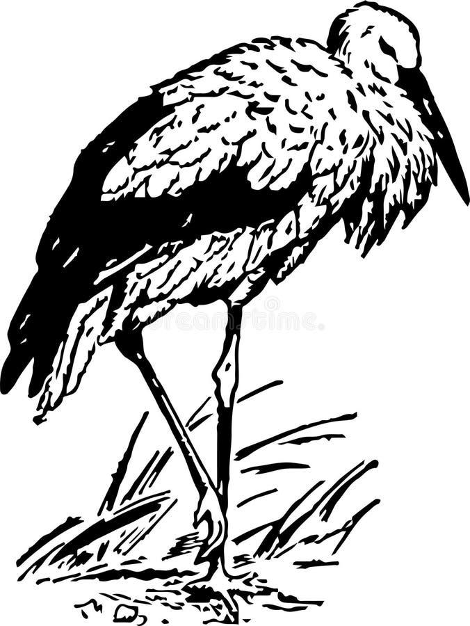 Красивый аист птицы сидит на одной лапке иллюстрация вектора